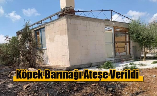 Baf'taki Köpek Barınağı Ateşe Verildi
