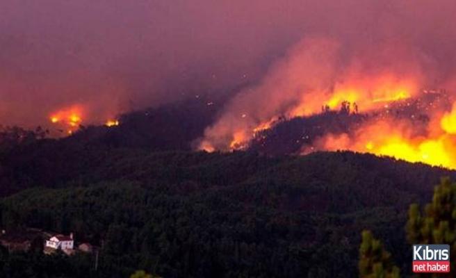 Portekiz'deki orman yangın