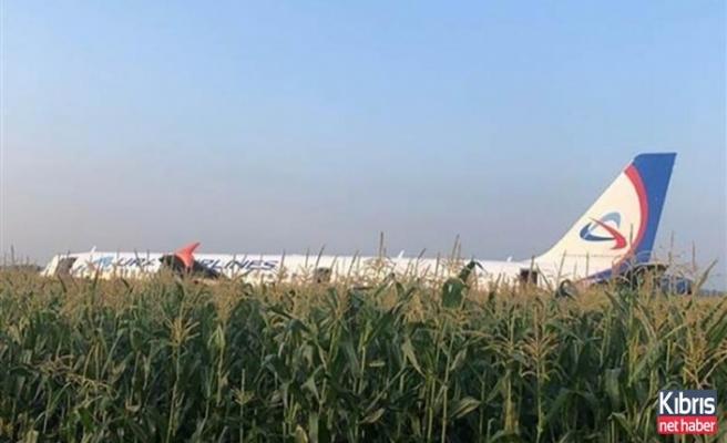 Martı sürüsüne çarpan uçak acil iniş yaptı