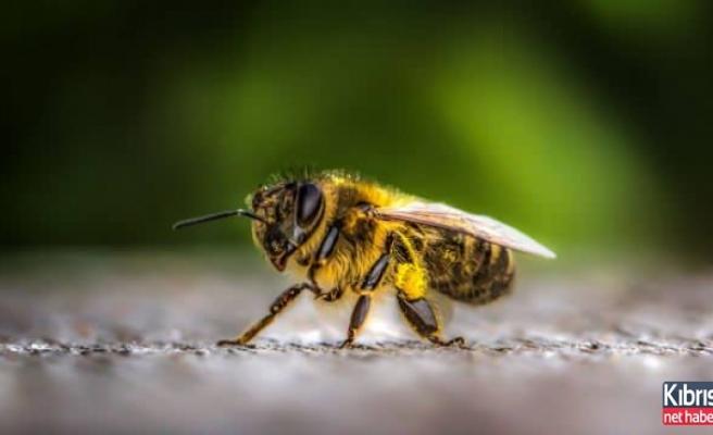 Arıların kıyameti...
