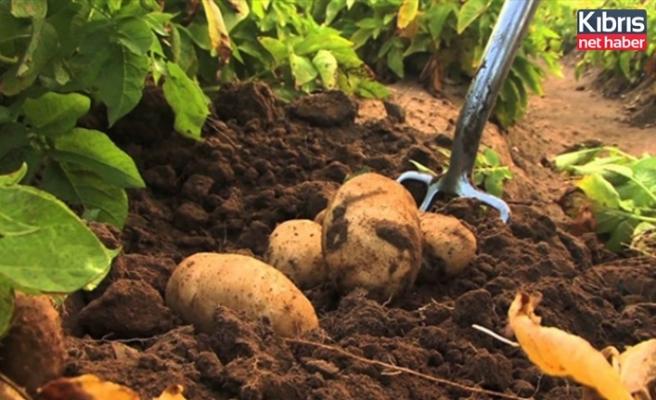 Patates beyanları 30 Ekim'e kadar kabul edilecek