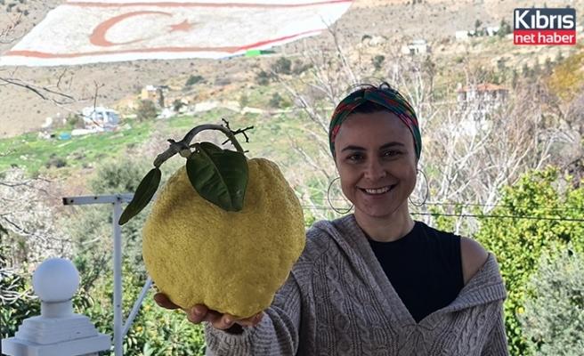 DoğaPark'dan Rekor Ağırlıkta Limon!