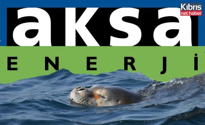 Aksa Enerji KKTC Kıyılarında Akdeniz Fokları'nın Yaşam Alanlarını Araştıracak