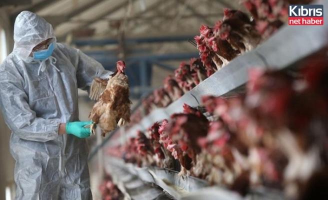 Çin'de ilk kez bir insana kuş gribi tanısı kondu