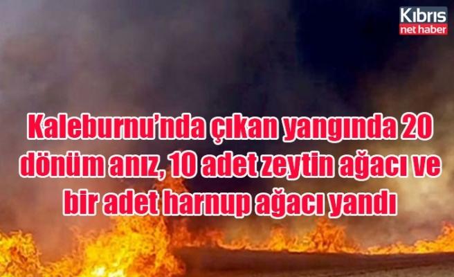 Kaleburnu'nda çıkan yangında 20 dönüm anız, 10 adet zeytin ağacı ve bir adet harnup ağacı yandı