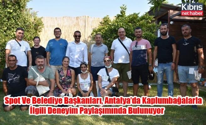 Spot Ve Belediye Başkanları, Antalya'da Kaplumbağalarla İlgili Deneyim Paylaşımında Bulunuyor