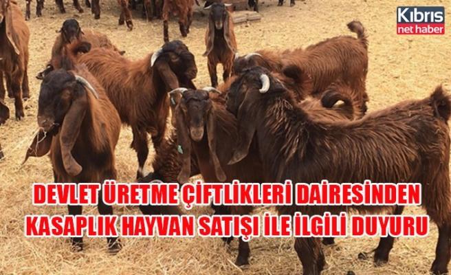 Devlet Üretme Çiftlikleri Dairesinden kasaplık hayvan satışı ile ilgili duyuru