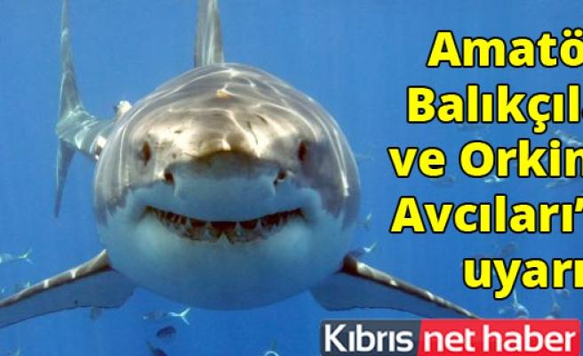 Esentepe Açıklarında Beyaz Köpek Balığı