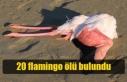 Larnaka'daki Tuz Gölü'nde 20 Flamingo Ölü...