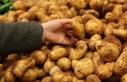 Tük Sofralık patates alımlarının 18 Mayıs Pazartesi...