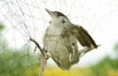 Gazimağusa'da pulya avlayan şahıs hakkında yasal işlem başlatıldı