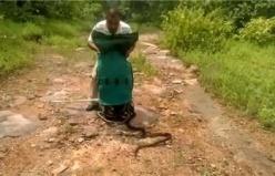 Yılan avcısı 285 tane yılanı aynı anda bıraktı