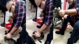 Kediye Sopayla İşkence Yaptı!
