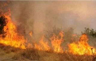 Lefkoşa Arazi Yangını