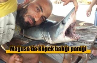 Palm Beach Sahilinde köpek balığı paniği