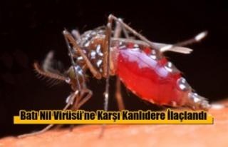 Batı Nil Virüsü'ne Karşı Kanlıdere İlaçlandı
