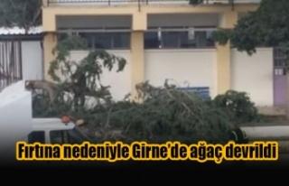 Fırtına nedeniyle Girne'de ağaç devrildi