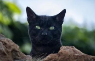 Kediye sahibinden koronavirüs bulaştı