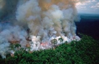 Brezilya'da yangınlar dünyanın en büyük...