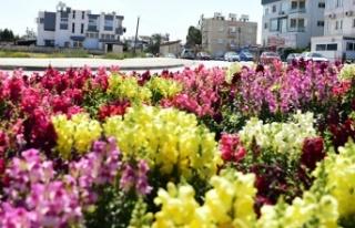 LTB, başkent Lefkoşa'yı bahara hazırlıyor