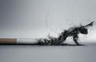 Her yıl yaklaşık 8,5 milyon insan tütüne bağlı...