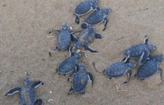 Kaplumbağaları Koruma Cemiyetinden dünya çevre...