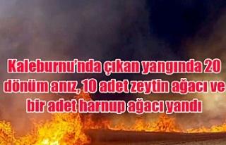 Kaleburnu'nda çıkan yangında 20 dönüm anız,...