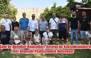 Spot Ve Belediye Başkanları, Antalya'da Kaplumbağalarla...