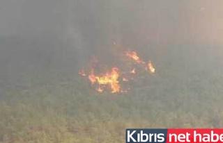 Güney'deki yangını 4 ülke söndürmeye çalışıyor