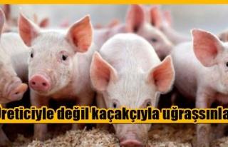 İzinsiz domuz kestiği iddia edilen İşletme iddialara...