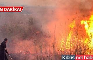 Kalkanlı Piknik Alanının Batısında Yangın