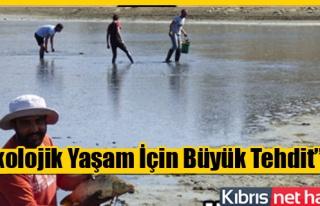 Kanlıköy'den 8 bin balık kurtarıldı