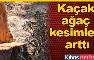 Ormanlarımız tehdit altında