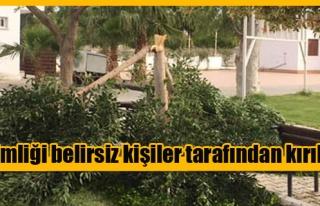 Vadili'de bir ağaca zarar verdiler!