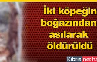 Yeni Erenköy'de vahşet!