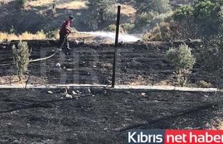 Yeşilırmak'ta yangın 50 dönüm kül oldu