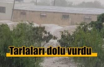 Dolu yağışı tarlaları vurdu, zarar büyük!