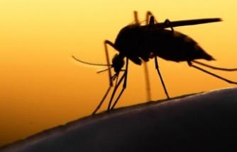 Güney Kıbrıs'ta 9 Batı Nil Virüsü Vakası Görüldü