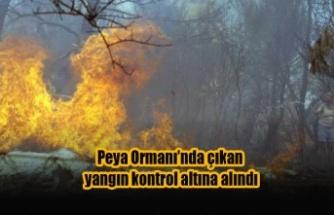 Peya Ormanı'nda çıkan yangın kontrol altına alındı