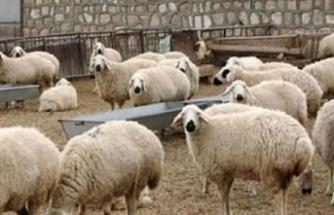 Devlet üretme çiftliklerinden kasaplık hayvan satışı