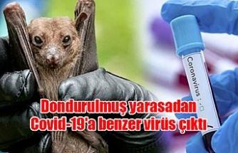 Dondurulmuş yarasadan Covid-19'a benzer virüs çıktı