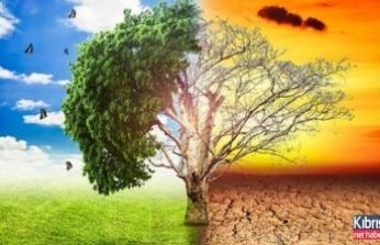 Küresel ısınmanın sonucu ölümcül mantar enfeksiyonu