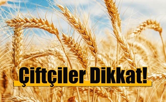 TÜK arpa buğday ve tritikale alımlarına başlayacak!