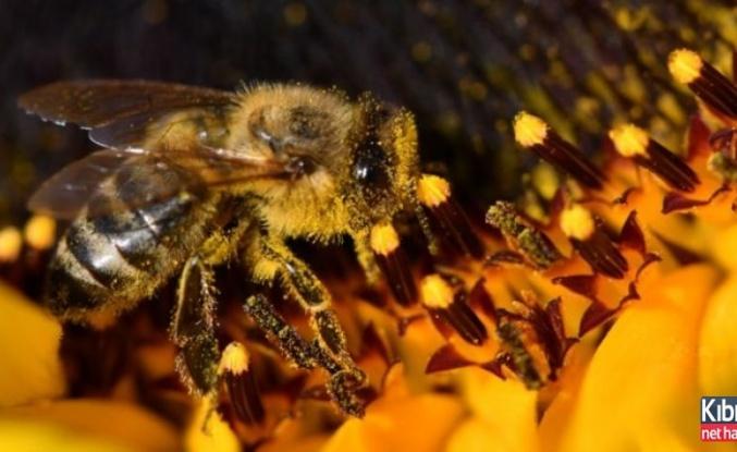 Brezilya'da 3 ayda 500 milyon arı öldü