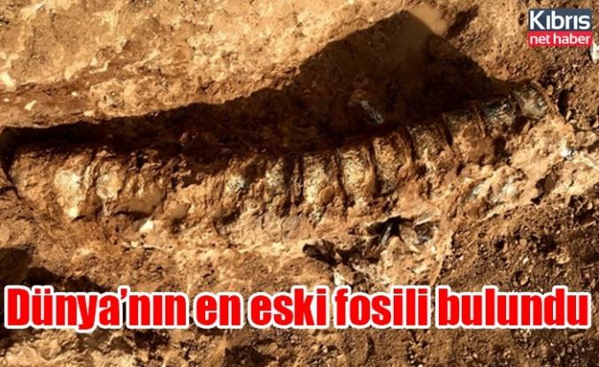 Kanada'da dünyanın en eski hayvan fosili bulundu!