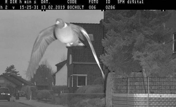 Hız sınırını aşan güvercin, kameraya yakalandı